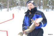 Трофей на зимней рыбалке в северной Карелии