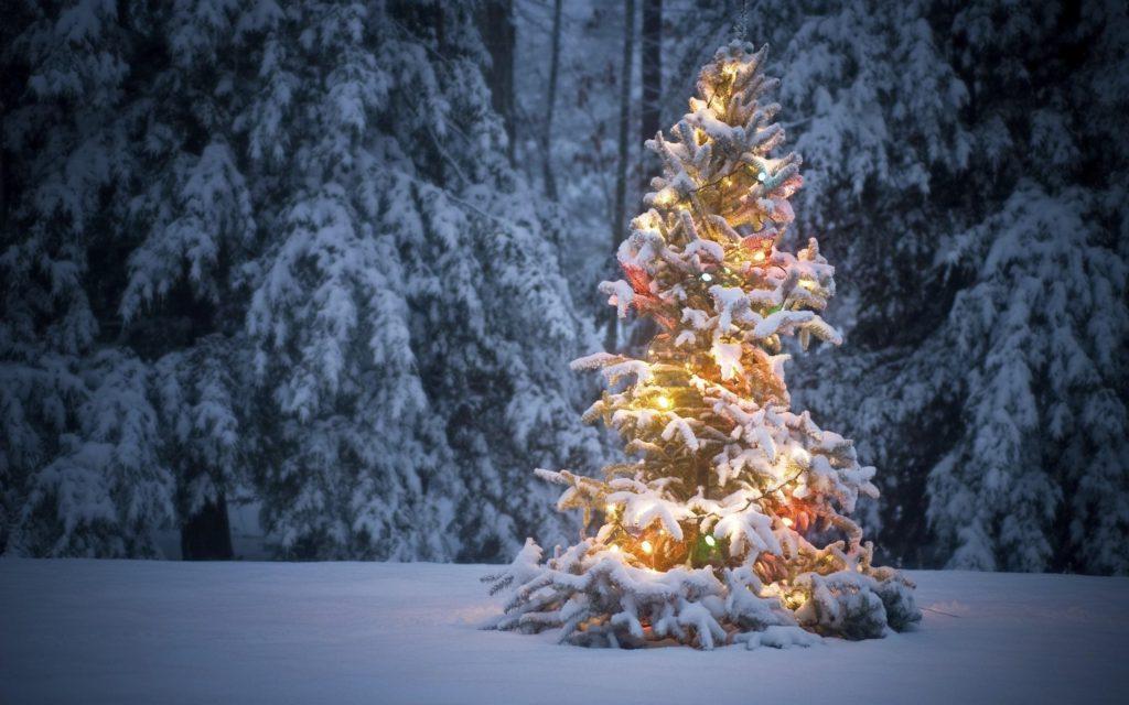 Новогодняя елка в Карелии