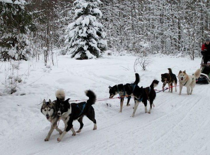 Трехдневный тур на собачьих упряжках по Пряжинскому району