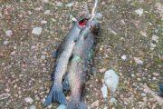 Рыболовный тур с вездеходной заброской