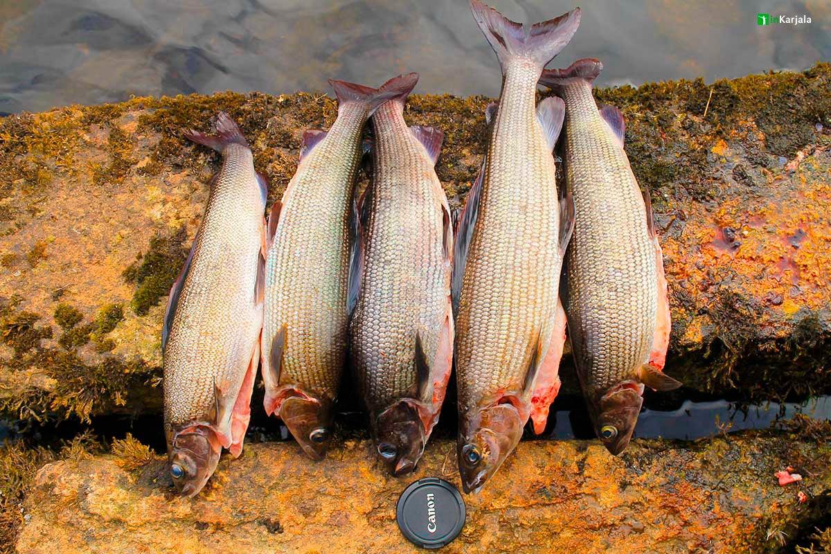 Экспедиционная рыбалка на вездеходе на Кольском полуострове