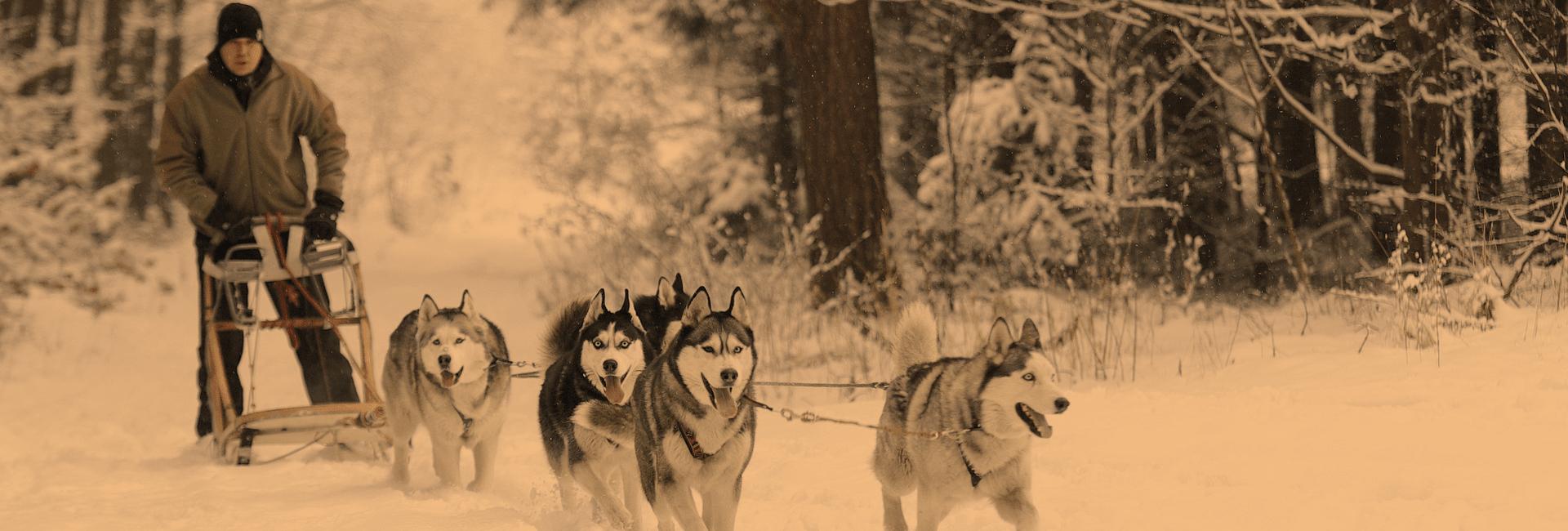 Тур на собачьих упряжках (3 дня)